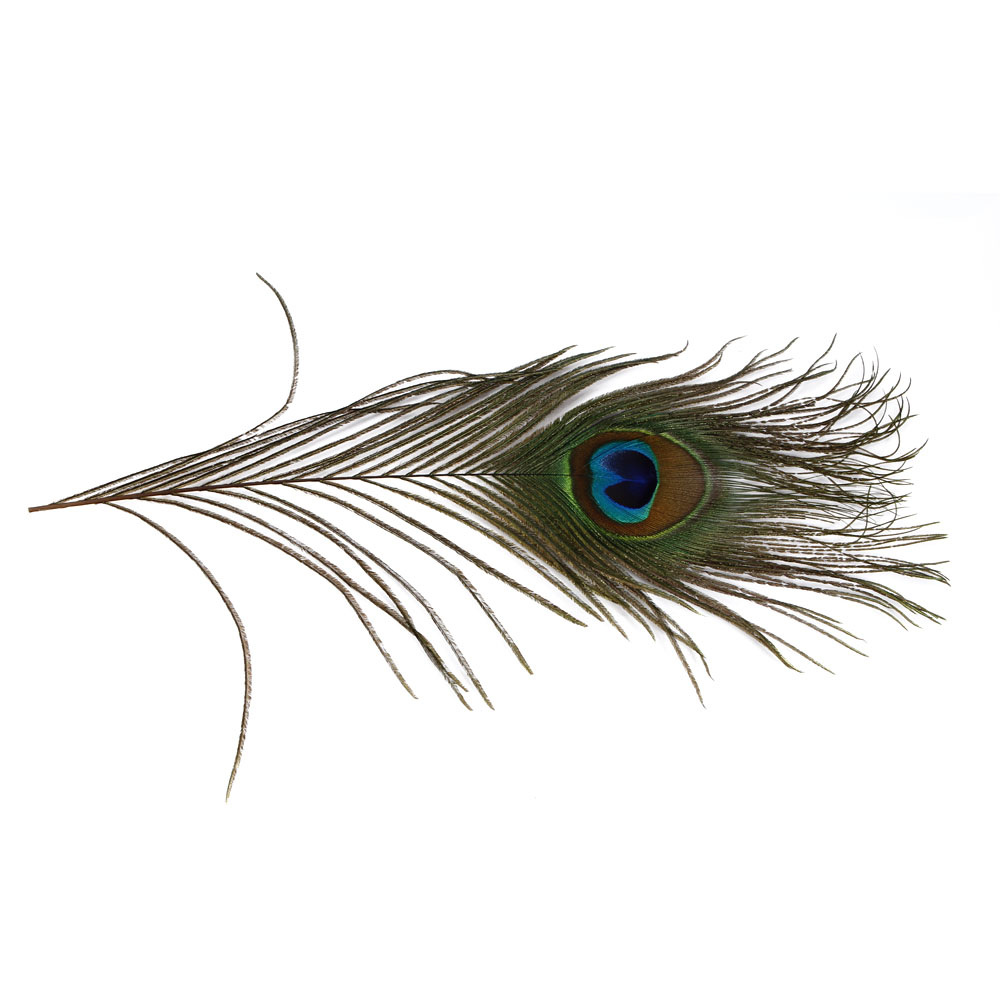 10 Eye Catching And Luxurious Black And White Bathroom Ideas: 100pcs Lots Real Natural Peacock Tail Eyes Feathers 10-12